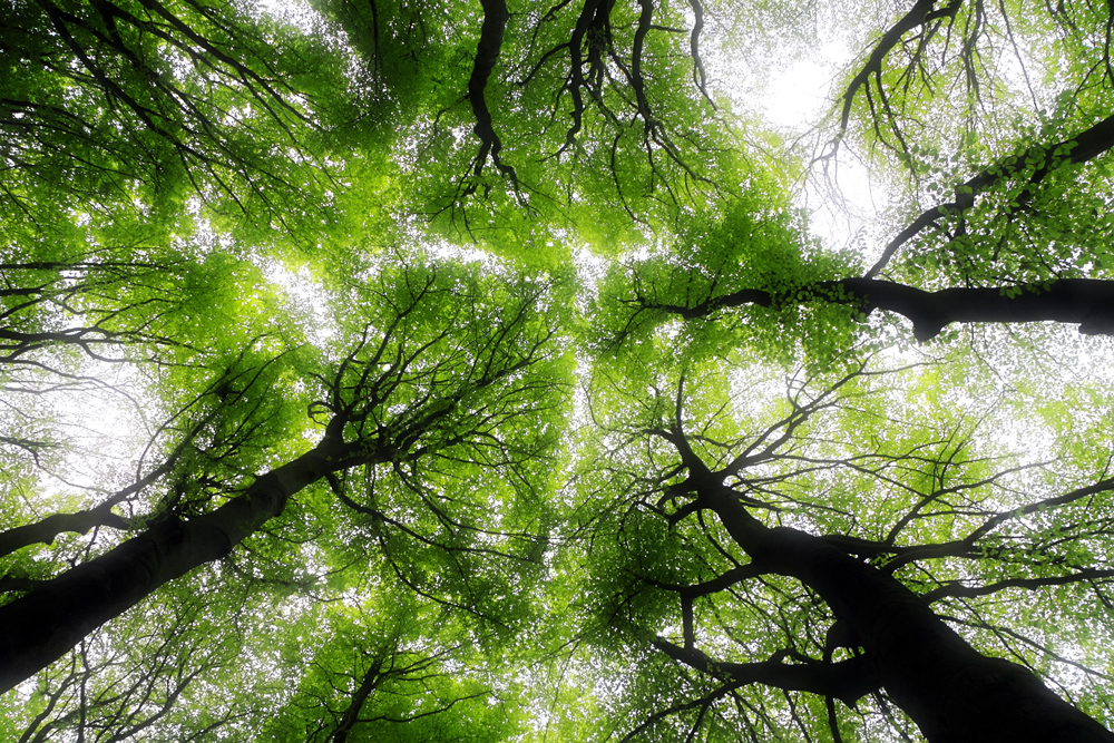 copa de árvores