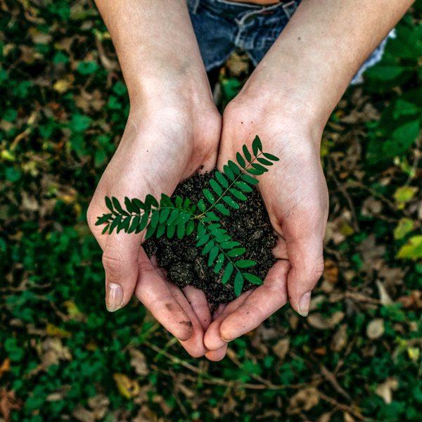 mãos plantando